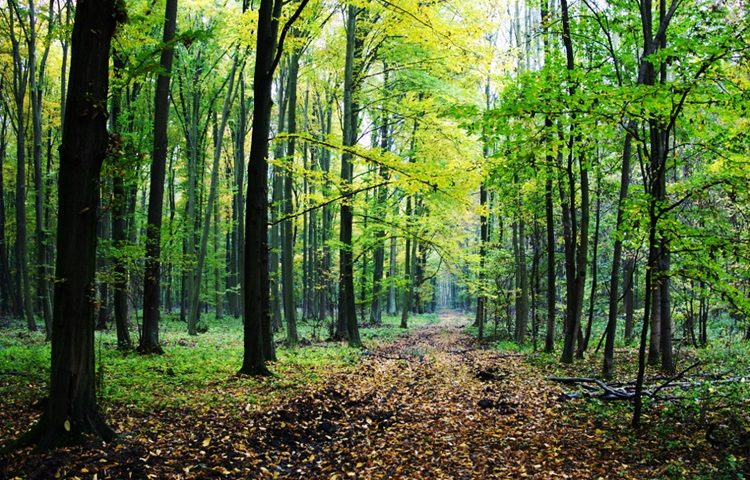 Bespovratna sredstva za uređenje šuma i postavljanje elemenata za informativno edukacijske svrhe od prirodnih materijala